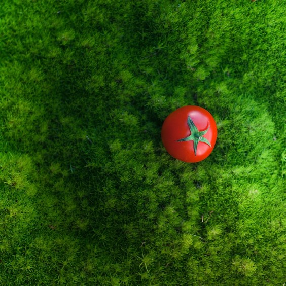 red-tomato-photography
