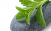 stevia Rebaudiana - dulcorant naturel, alternative au sucre