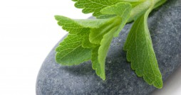 stevia Rebaudiana - Ždulcorant naturel, alternative au sucre