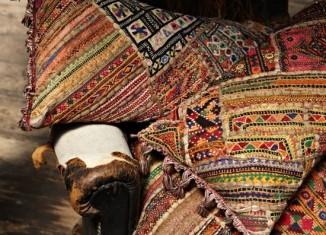 kilim cushions plumo